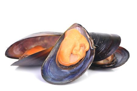 Fresh mussel