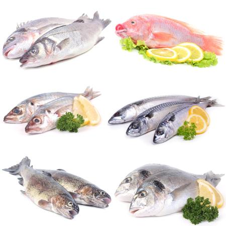 salmonidae: sea ??fish