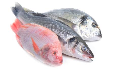 sea ??fish