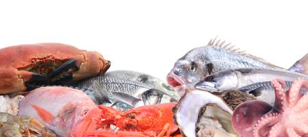 gilthead: fresh seafood