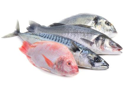 salmo trutta: sea ??fish