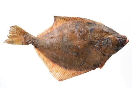 cuerpo entero: halibut Fish Foto de archivo