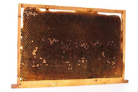 honeycombs: Bee honeycombs Stock Photo