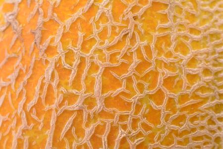 melon fruit: Melon fruit texture