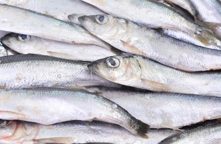 sprat: Fish sprat Stock Photo
