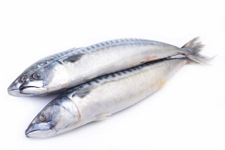 coldblooded: Fish mackerel