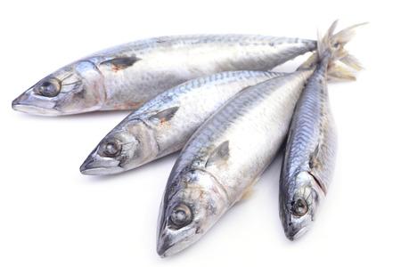 mackerel fish 版權商用圖片