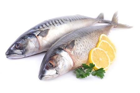 Fish mackerel on a white background Reklamní fotografie - 105359902