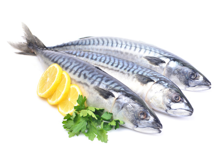 Fish mackerel on a white background 스톡 콘텐츠