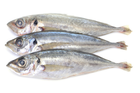 Fish horse mackerel in white background 写真素材