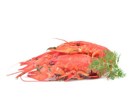 Bolied crayfish on white background Stock Photo