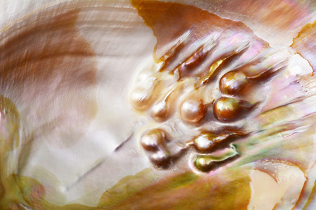 Shell texture pearl