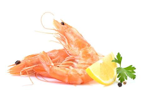 Shrimp on white background