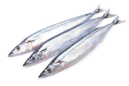 Saury fish on white background Stock Photo
