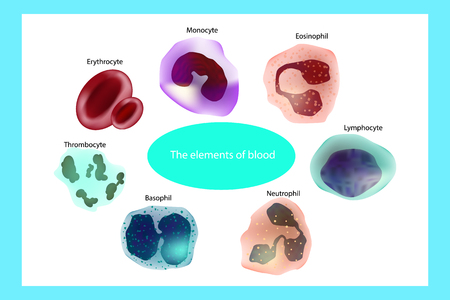 Blood cells. The elements of blood. Infographics. Stock Vector - 103286550