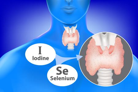 sélénium et iode nécessaires au fonctionnement de la glande thyroïde