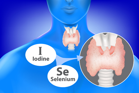 selenium and iodine necessary for the functioning of the thyroid gland