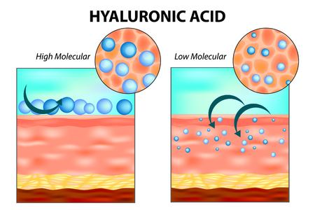 Hyaluronic acid in skin. Low molecular and High molecular.