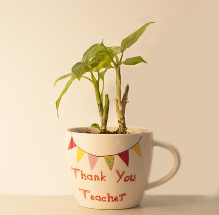bebes lindos: Planta de la casa en una taza Usted profesor le agradece Foto de archivo