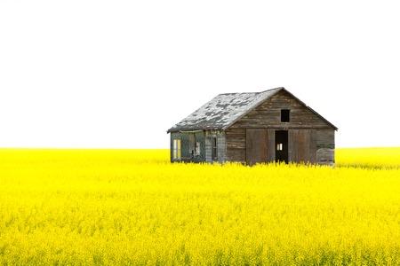 Alte h�lzerne verlassenen Haus gelben Feld isoliert wei�en Himmel