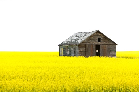 Old wooden abandoned house yellow field isolated white sky Stock Photo