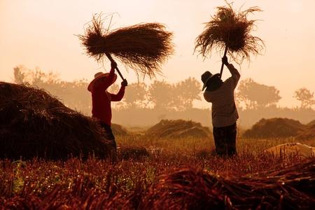 農家: 農家の生活、チェンマイ、タイ
