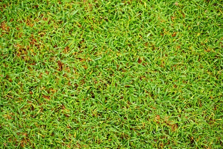 Green grass in golf course photo