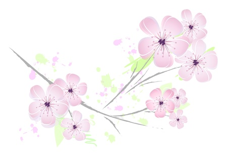 Flower - illustration - pink cherry blossoms against white background - floral japanese spring design - suitable for themes like love, beauty, valentine, birthday, wedding and the like