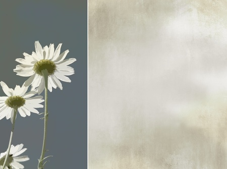 Flower card, greeting card - light grunge floral background - vintage design - daisies photo