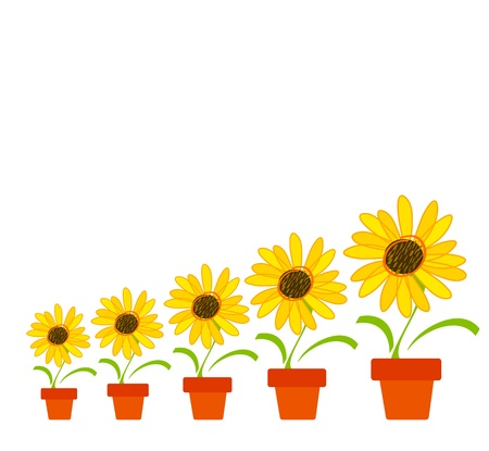 Sunflowers in a pot Vector