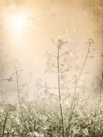 Vintage flower background on light sepia grunge paper photo