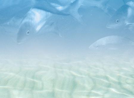 Water background with fishes - soft grunge underwater scene photo