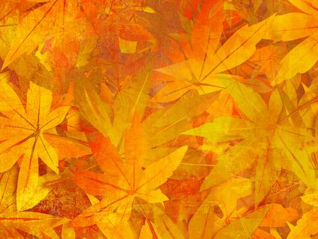 Autumn background - fall leaves pattern Standard-Bild