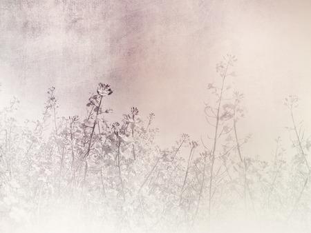 canola: Romantic background - vintage field landscape Stock Photo