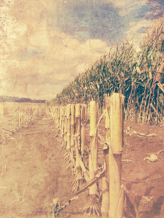 arable: Retro corn field - arable land picture with old photo effect Stock Photo