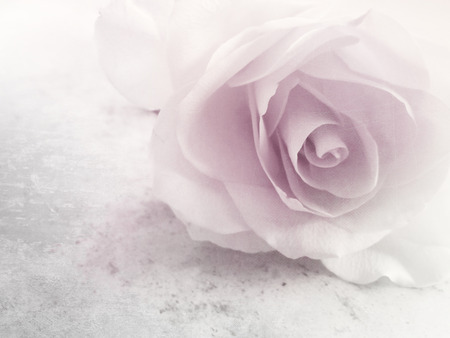 Soft rose design - vintage flower background photo