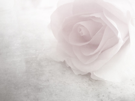 pale: Soft pink rose - vintage flower pattern