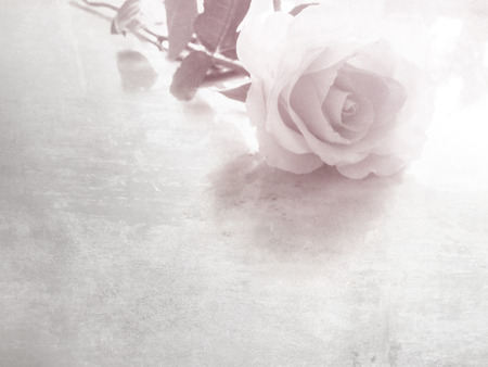 Rose flower on white table with copy space