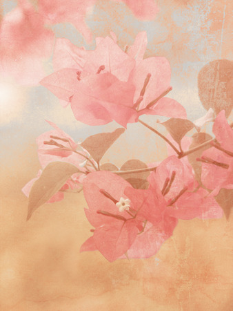 bougainvillea: Bougainvillea with soft vintage oil painting texture - flower background Stock Photo