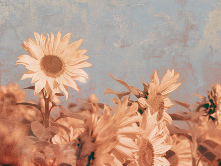 Retro sunflower background photo