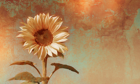 single flowers: Retro sunflower background with single flower