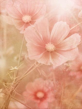 field of flowers: Vintage field flowers