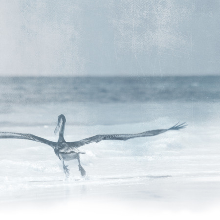 fade away: Bird flying towards the horizon - freedom concept - vintage style