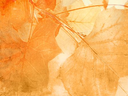 nervure: Leaf veins background in soft vintage style