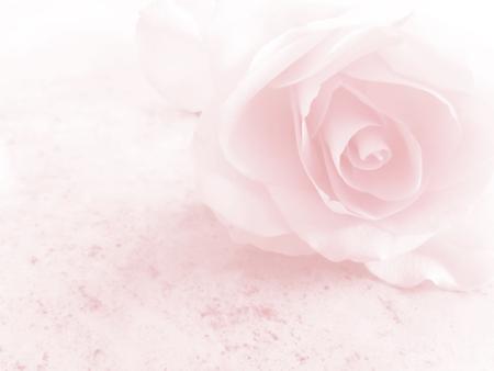 Romantic soft pink flower background Stock Photo