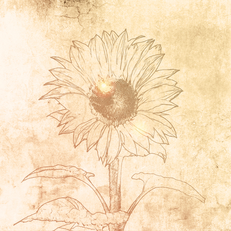 Sunflower drawing on soft beige canvas paper in vintage style Banco de Imagens