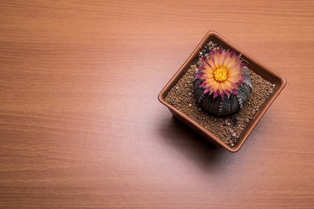 to thrive: Catus with pink flower on wood background with unique light