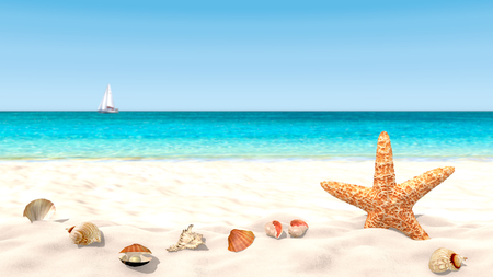 Shells and starfish on a sandy beach with a blurred background in order to focus on the foreground. Copy space available. Stock Photo