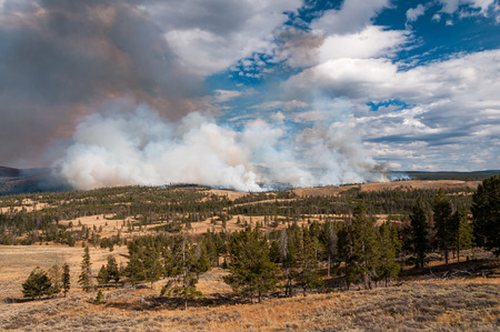 rages: Antelope Creek wildfire rages through Yellowstone National Park, 2010