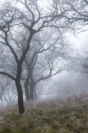 Vertical view of forest in mist. photo